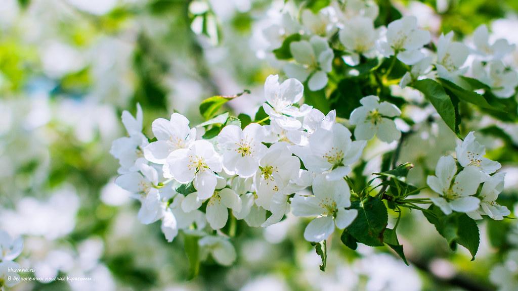 Картинки весна цветы природа на рабочий стол