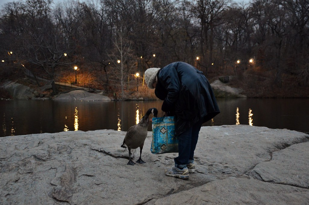 Central Park-The Lake, 12.20.14