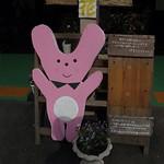 兵庫県神河町名水街道自転車下り。カーミン。