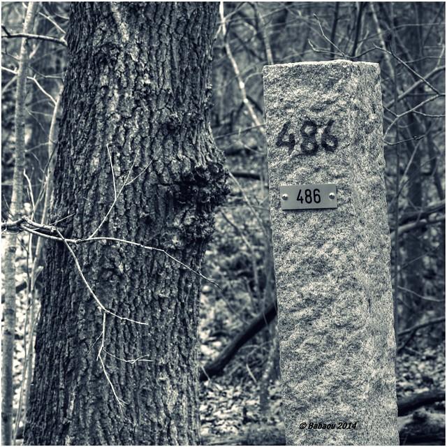 Baum an 486