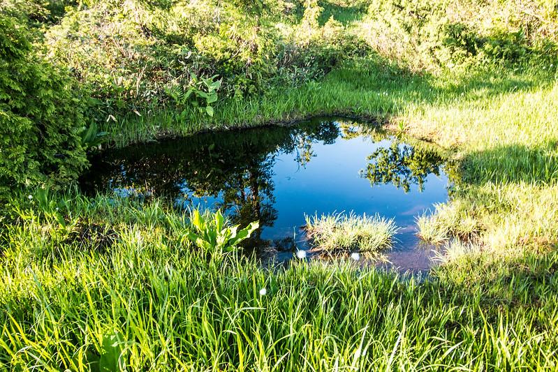 燧ヶ岳 池塘