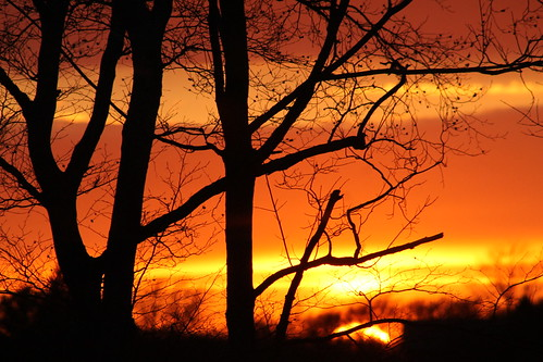 trees sunset ohio sky orange tree night canon photography colorful bright outdoor cleveland foliage clevelandohio serene canonphotography