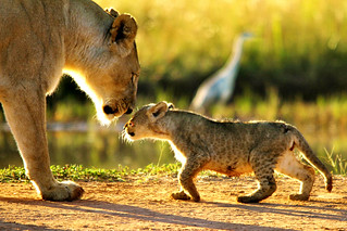 Maternal Love 1copy | by James Currie