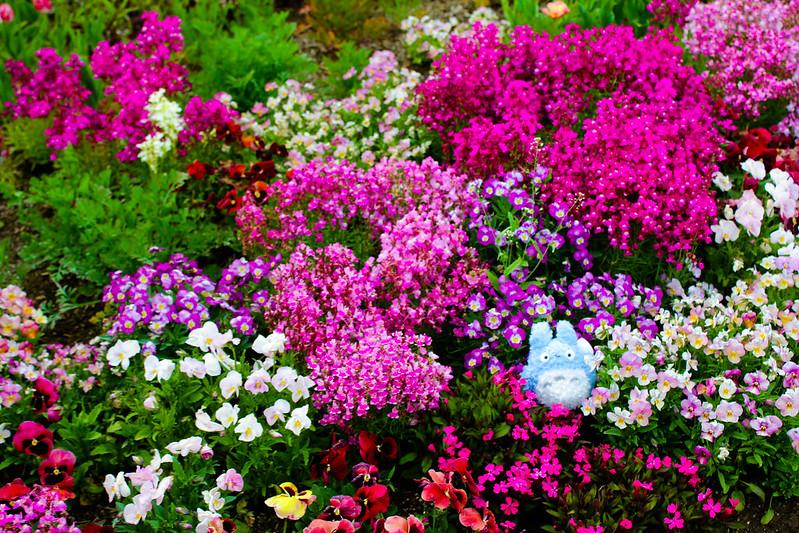 2014-05-04_00977_九州登山旅行.jpg