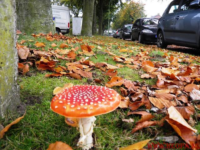 20-10-2012     Wedeblick-   Driebergen        25 Km (105)