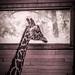 Sad giraffe by erik_76