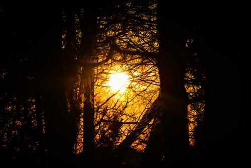 trees sunset sun house tree home yellow pine virginia backyard unitedstates neighborhood through centreville