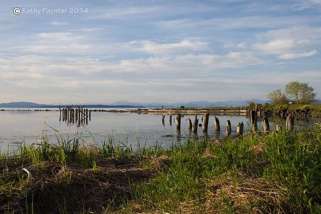 Oyster Bay - thru the grass