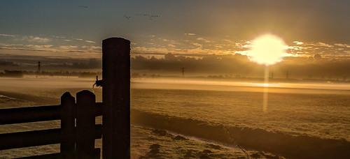 morning sun clouds sunrise fence dawn grassland polder hff sundawn middendelfland migrantbirds nederlandvandaag fencefriday
