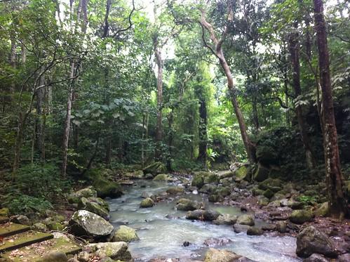 mountain gardens botanic laguna makiling