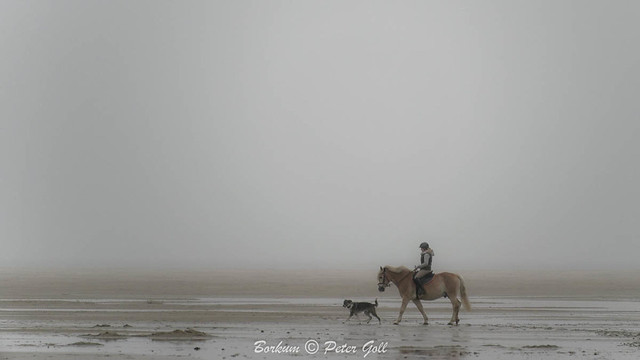 Horse with dog in the fog