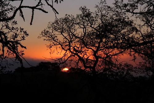 northerncalifornia sunrise dawn sunup oaktrees fairfieldca solanocounty oakridgetrail serpasranchopenspace