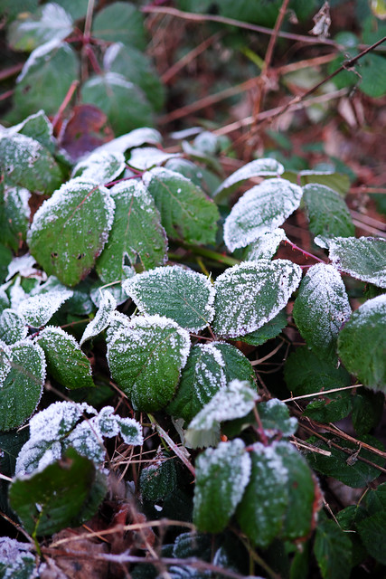 remaining frost