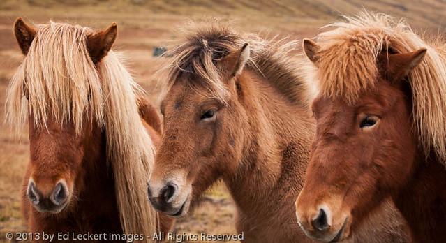 The Three Amigos, Snaefellsnes Peninsula, Iceland