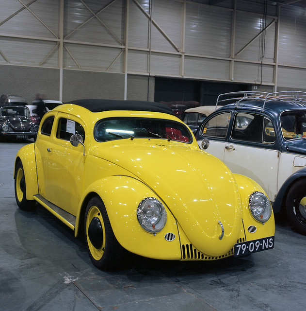 Chopped  yellow oval