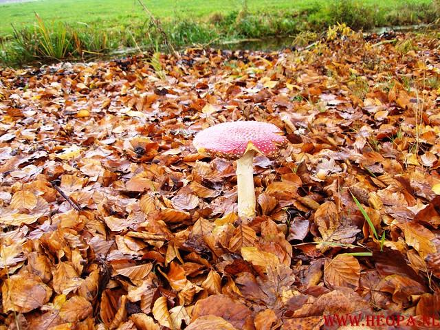 15-11-2009            Gooise lus       18.5 KM    NS Wandeltocht  (32)