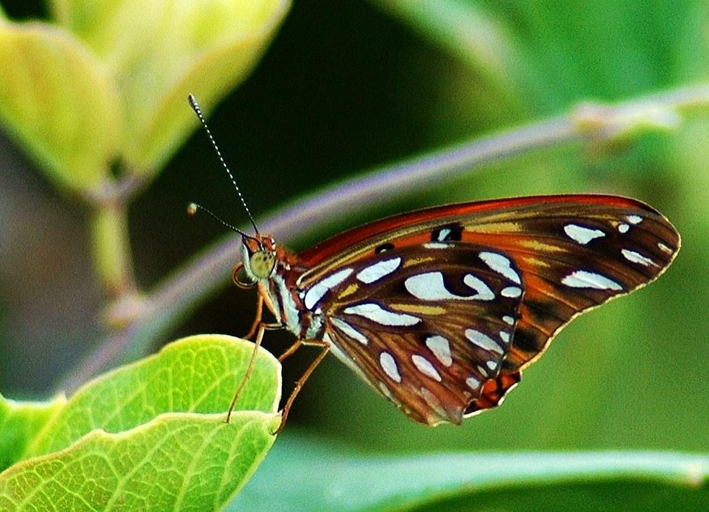 Brasilien-Iguassu - Schmetterlinge - filigran, 481a/7837