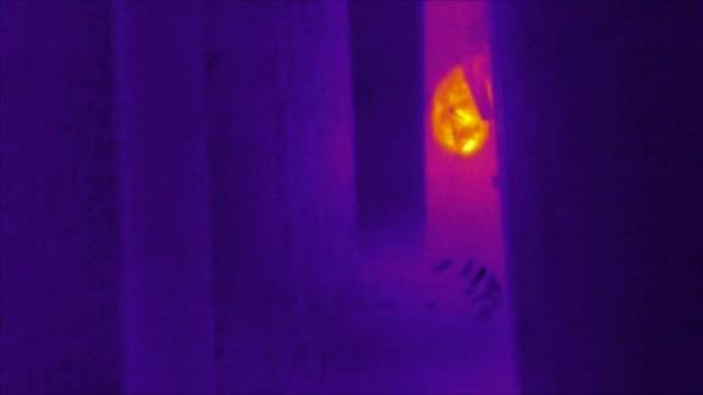 Thermal Video of a Big Brown Bat