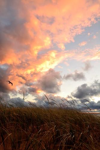 pink sunset sea summer bird clouds mi dark gull lakemichigan goldenhour manistee beachgrass september2013