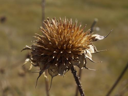 geotagged sunflowers seedheads deadheads helianthus flowerheads woodlandlakewoodlandlakeparklakesripariannaturepinetoppinetop arizonapinetoplakesidearizona geo:lat=34125558827025976 geo:lon=10995415983068847