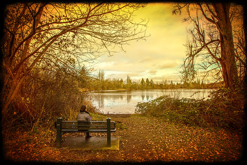 fortsteilacoompark lakewoodwa piercecounty waughoplake bench birds trees texture timinohio explore
