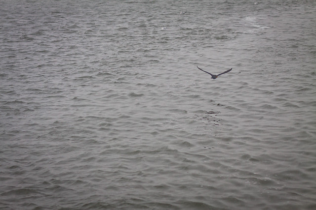 Cold Bird Flying