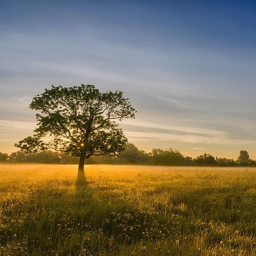 light tree landscape dawn golden countryside nikon day meadow clear warwickshire alcester d7000 jactoll nikcolorefexpro4