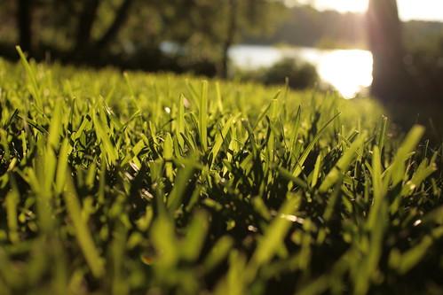 sunset lake green grass florida blade tallahassee canonef35mmf14lusm