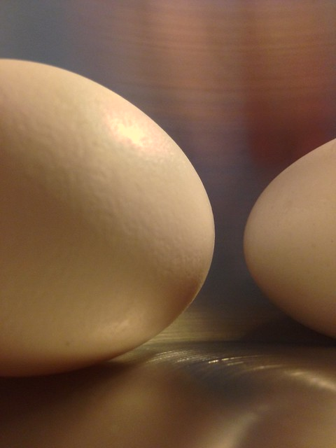 Two Eggs in a Stainless Steel Bowl - v6653
