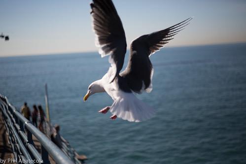 Seagul Landing | by abatecolasan