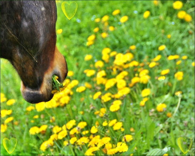 ~~Mille fleurs pour vous dire MERCI~~