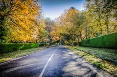 Mt Macedon Autumn Colours-26