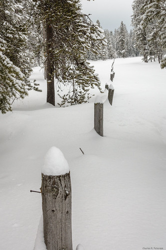 trees winter snow fence landscape idaho harrimanstatepark fremontcounty charlesrpeterson petechar sonyrx100m3