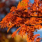 Burnt Orange Glow