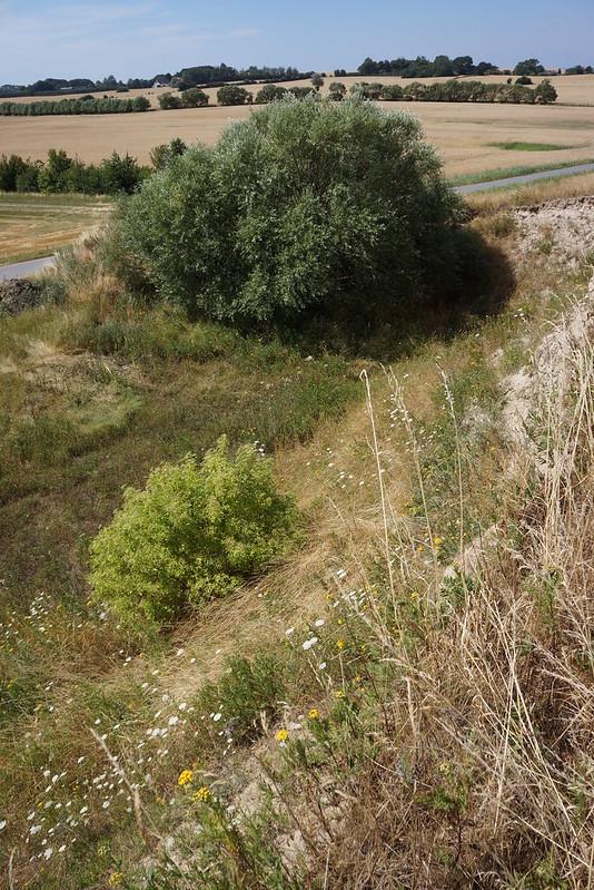 Kaedeby-Haver-2014-07-24 (17)