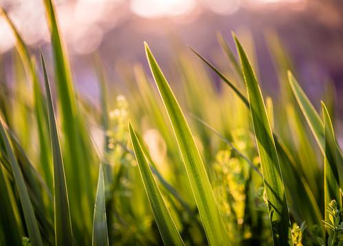 light shadow usa plant blur green nature grass photography us photo spring texas photographer shadows unitedstates image fav50 tx unitedstatesofamerica houston fav20 100mm photograph 100 february fav30 f28 blades hermannpark hermann trier bladesofgrass fav10 harriscounty 2013 fav40 bladegrass ¹⁄₂₅₀sec eos5dmarkiii ef100mmf28lmacroisusm mabrycampbell february282013 201302280h6a0716 trierdesign