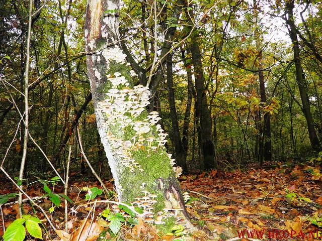 20-10-2012     Wedeblick-   Driebergen        25 Km (98)