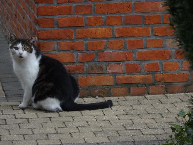 Cats from the neighbourhood