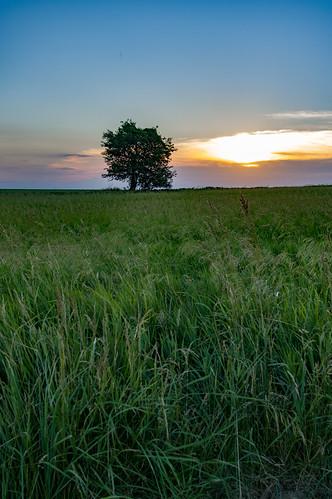 sunset tree field us unitedstates iowa vinton