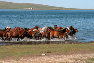 Horse Herd Running in Water | by frans16611
