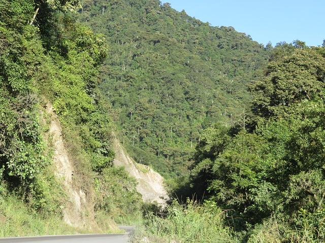 Road to Bellavista