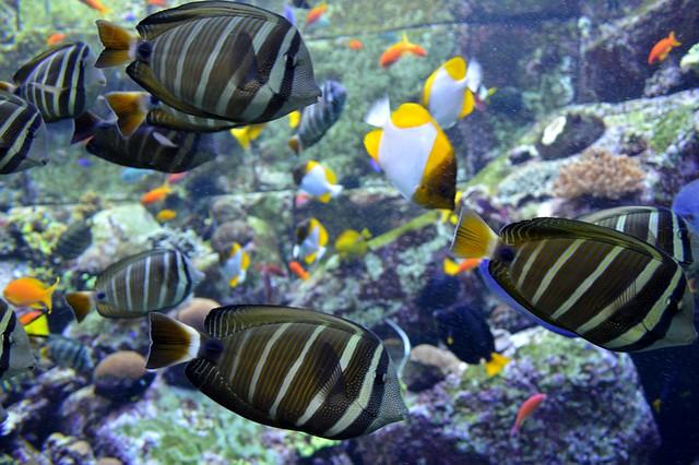 Atlantis Aquarium, Palm Jumeirah, Dubai