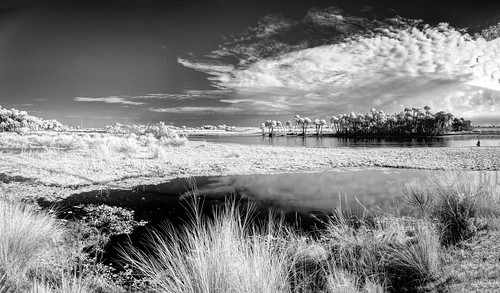 bw black blackandwhite centralflorida cloud florida grass ir infrared landscape palm panorama reflection river sky tree usa water white fishing christmas tosohatchee edrosackcom