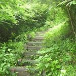 森のキャンプ場のトレイル