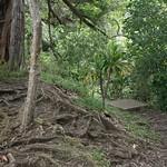 Rain forest, Maui