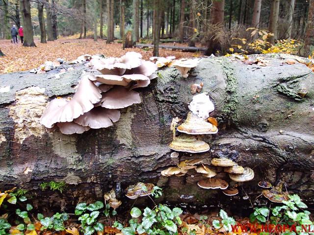 15-11-2009            Gooise lus       18.5 KM    NS Wandeltocht  (64)