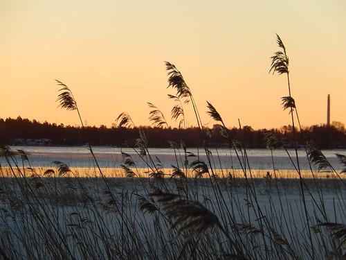 morning winter light snow ice sunrise weeds horizon