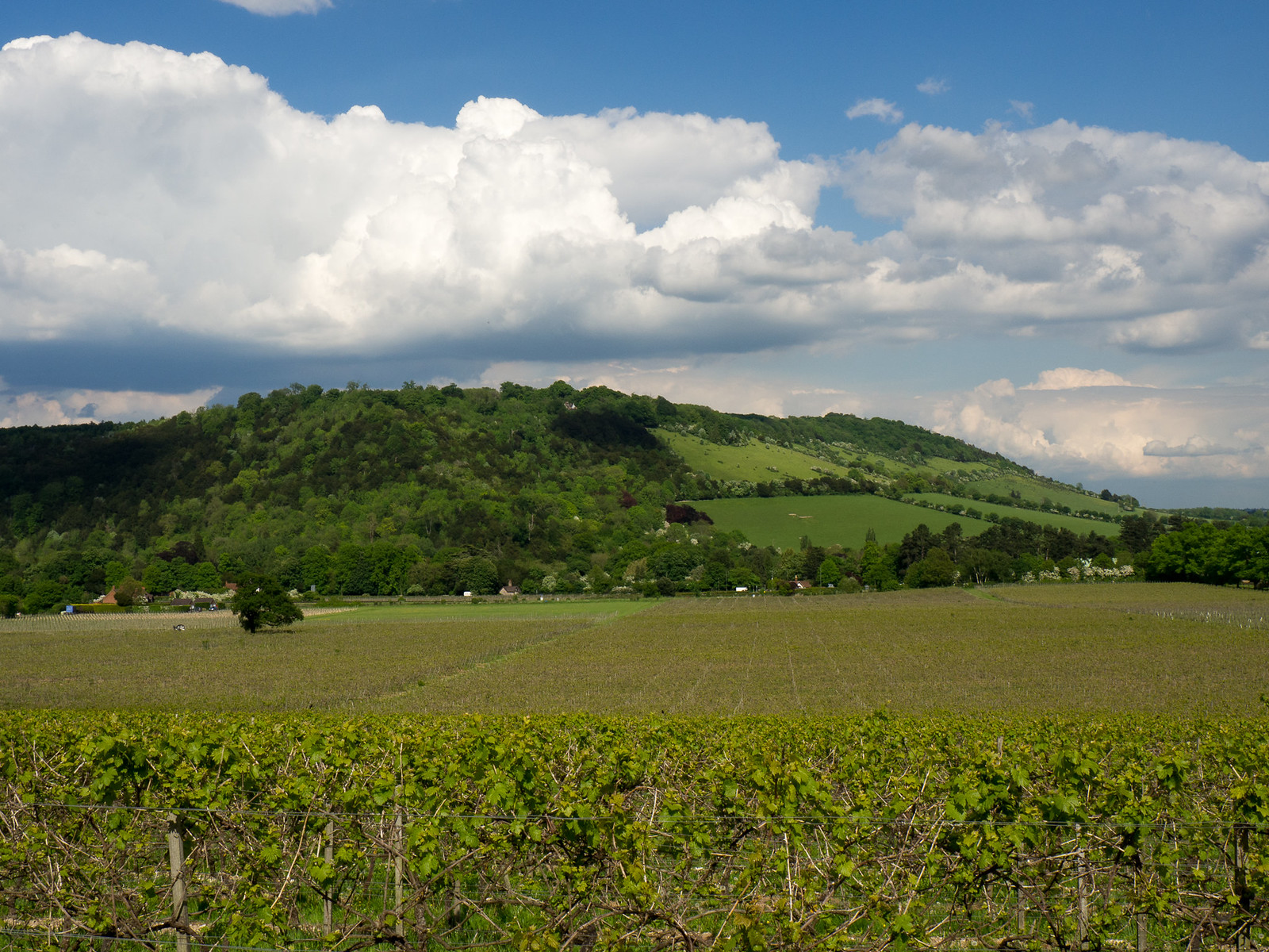 "Denbies Wine Estate We walked the Mole Gap Trail from Leatherhead to Dorking, with a detour for Box Hill. www.visitdorking.com/explore/walks-and-trails/mole-gap-trail/"" rel=""nofollow www.visitdorking.com/explore/walks-and-trails/mole-gap-tr... www.walkingclub.org.uk/book_1/walk_49/"" rel=""nofollow www.walkingclub.org.uk/book_1/walk_49/"