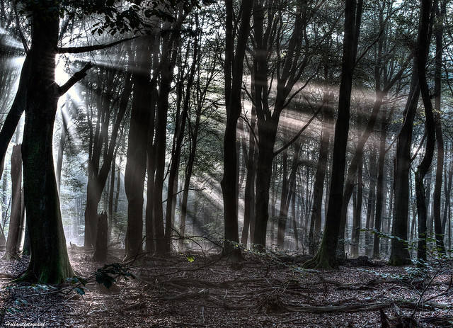 rays and dancing trees