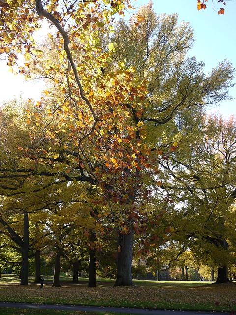 日, 2013-11-03 14:41 - Bronx Botanical Garden の紅葉